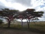 Trees before rain.