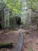 Woodland walk.