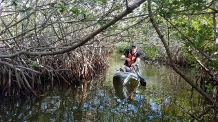 In the mangroves.