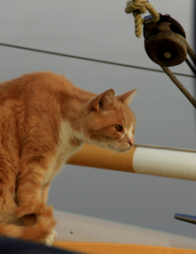 The Bosun, Simon, spotting something...