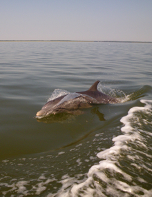 Dolphin swimming by.