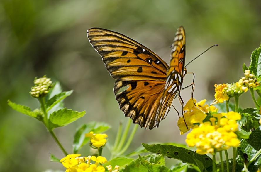 Αποτέλεσμα εικόνας για Το κουκούλι της πεταλούδας
