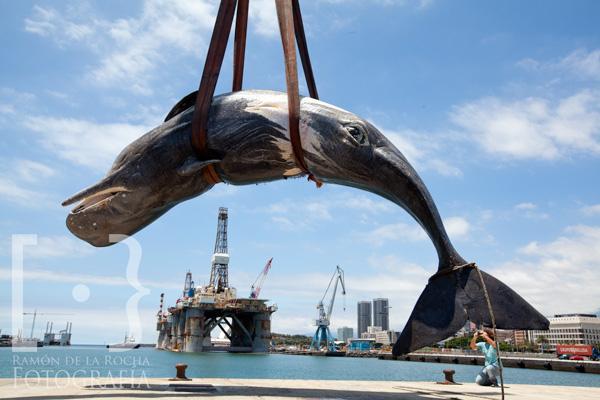 Cachalote encontrado muerto en la bahía de Santa Cruz de Tenerife