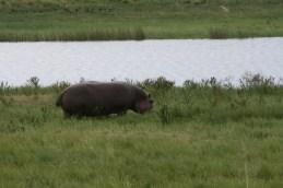 Wildlife | Botswana
