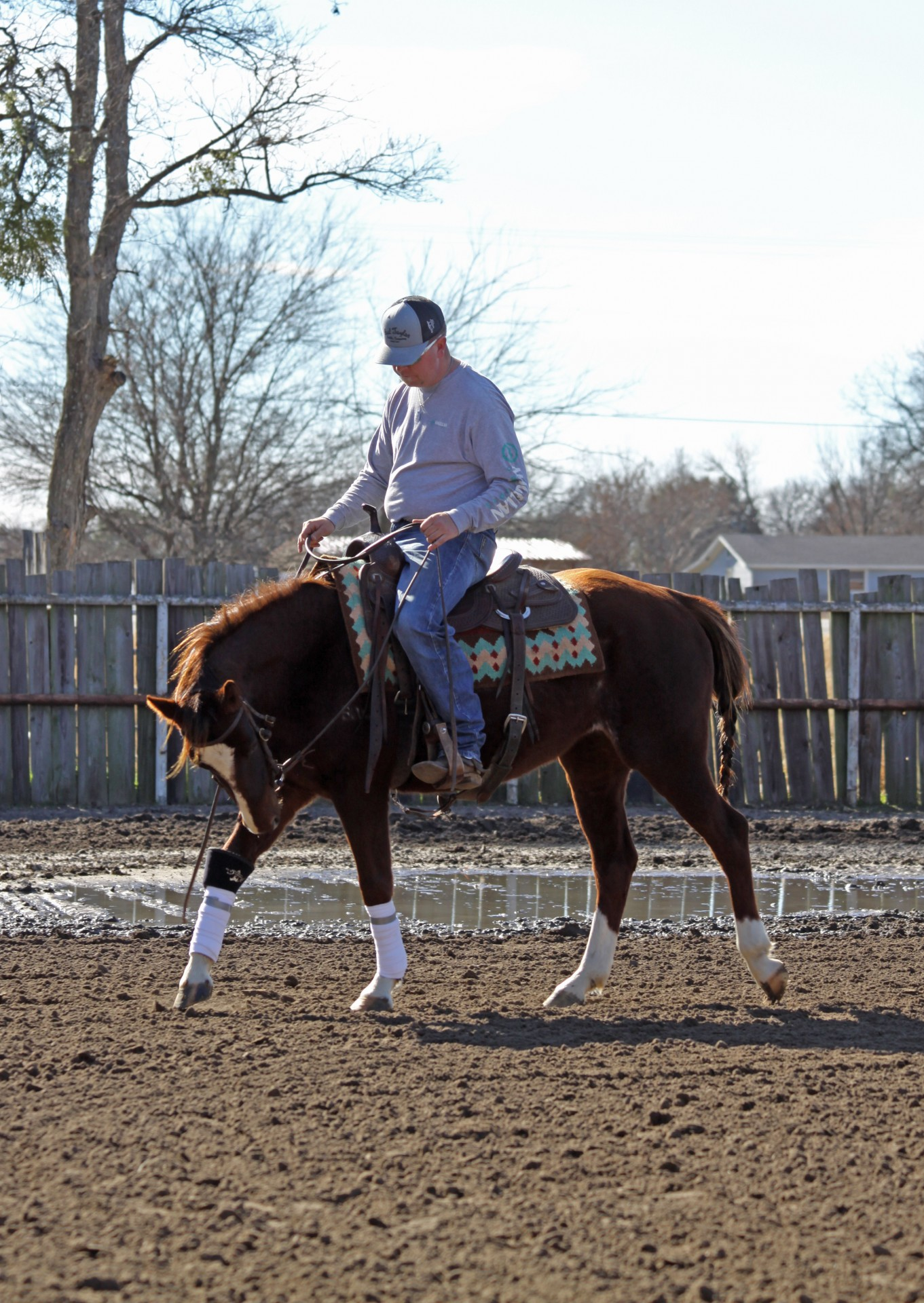4 Year Old Mare With 2 Years Cow Horse Training
