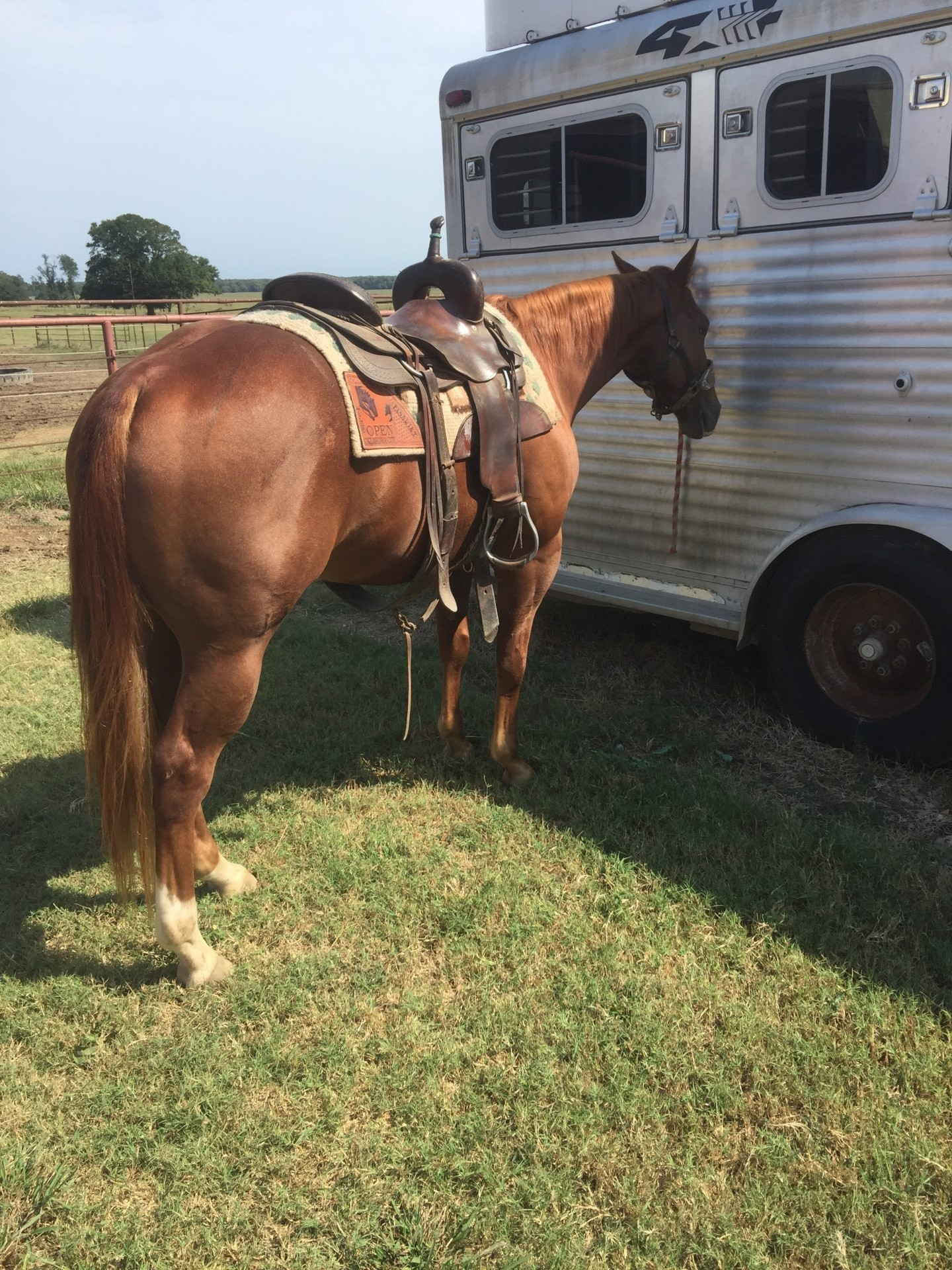 4 Years Old Cutting Horse