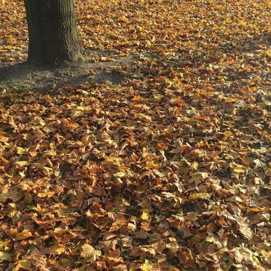 Att fånga höstens skönhet