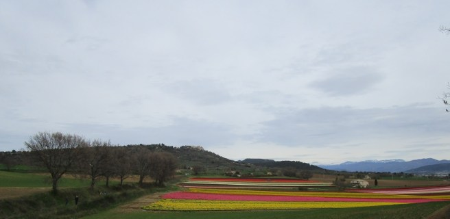 Lurs domine les champs de tulipes