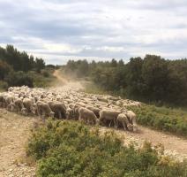 Les bergeries des terres gastes, les Brulades à Eguilles