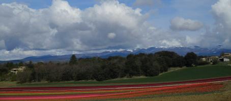 Les tulipes de la Brillanne, la glacière et Notre Dame des Anges à Lurs
