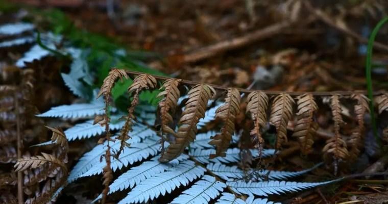 A não perder em Rotorua – Redwoods – Nova Zelândia