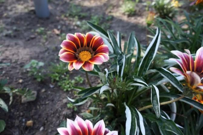 Cerro Santa Lucia - Flowers