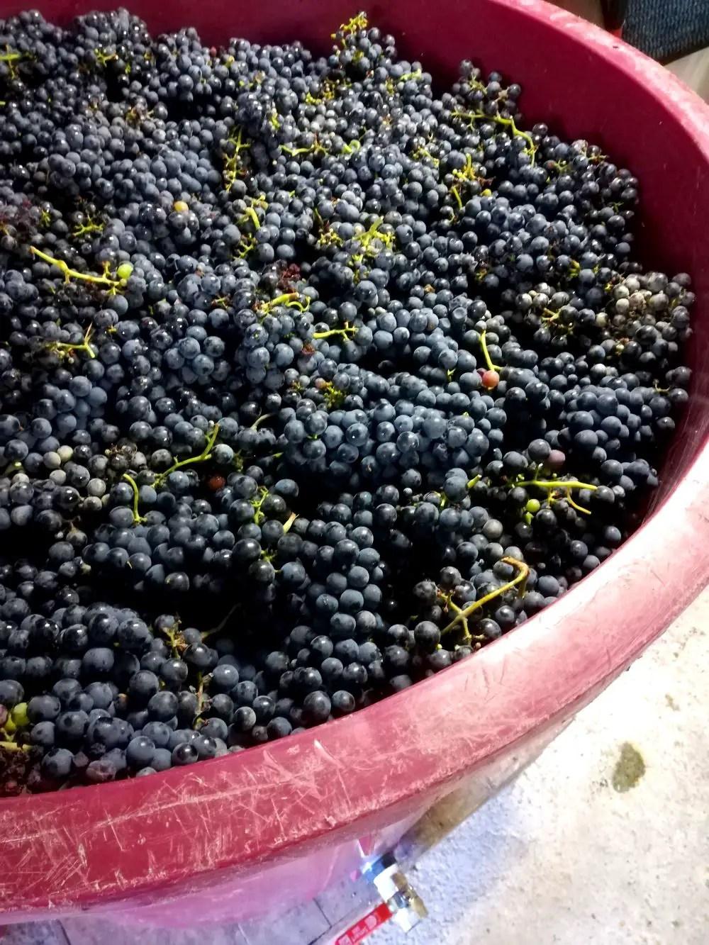 Vessel full of grapes
