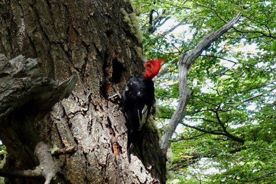 A Robust Woodpecker