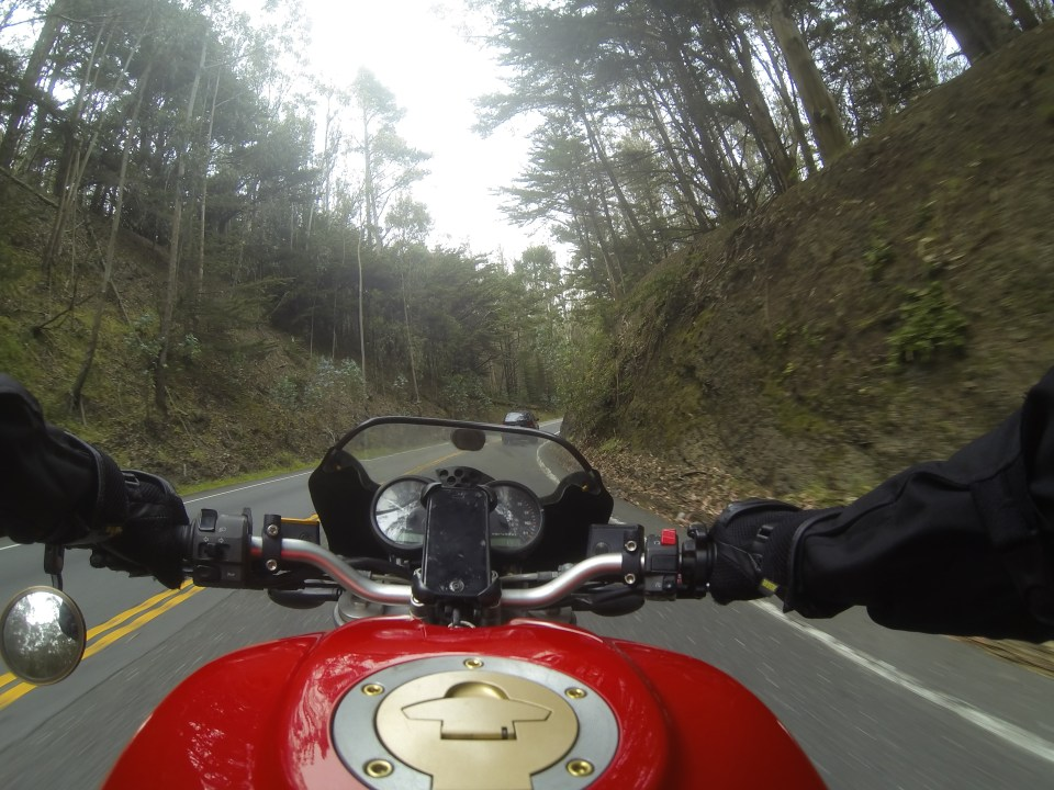 Riding next to the trees in Big Sur