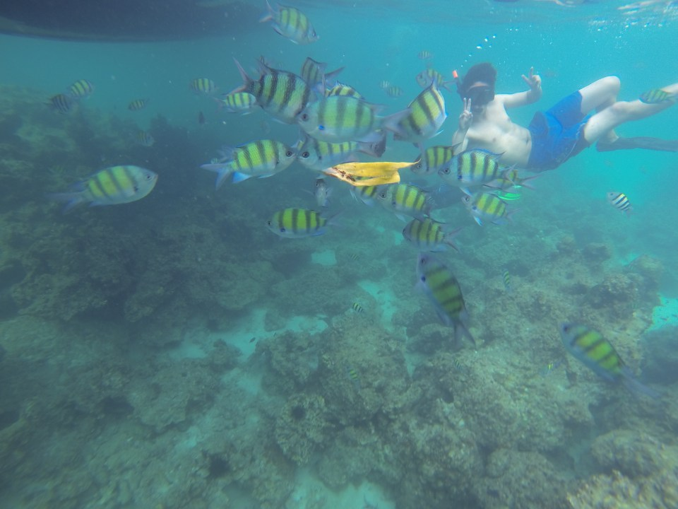 Snorkeling with tropical fish at Phi Phi Islands
