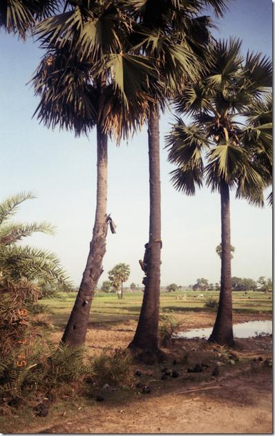 india-n 0157