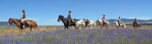 Toute notre offre de randonnées itinérantes en Provence