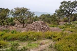 Randonnée à Djebel Tabouba - charbon