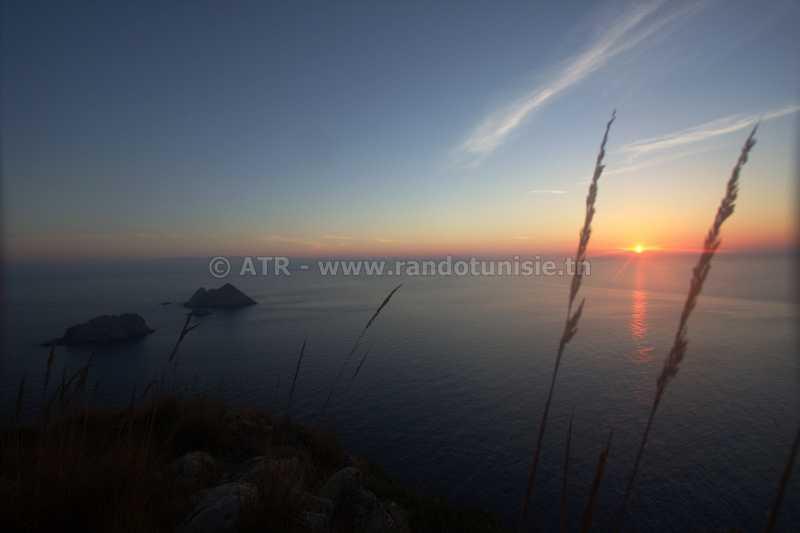 L'archipel de la Galite un trésor naturel dans un coin perdu - ile des chiens
