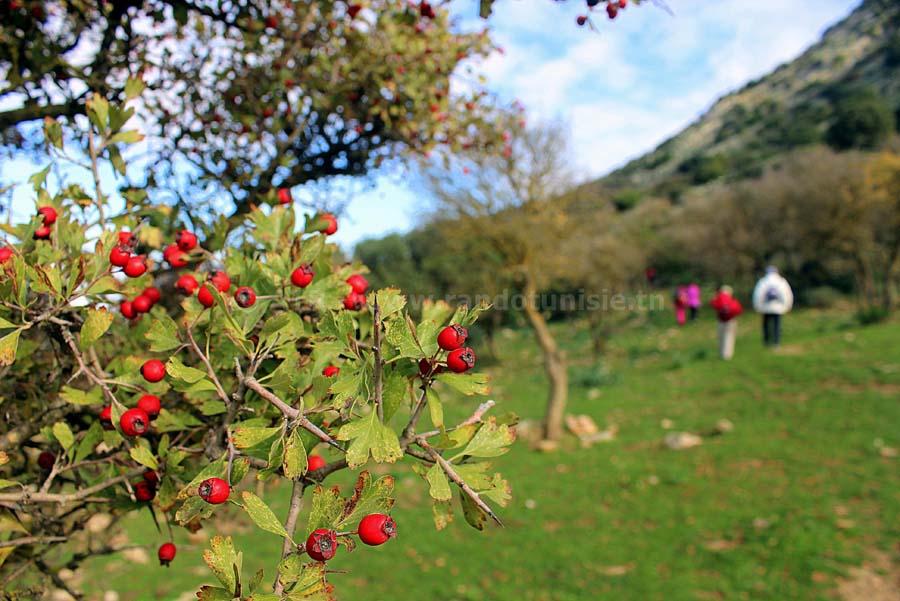 Zaghouan Sidi Medien