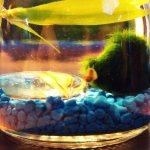 Best Jars For Your Self Sustaining Terrarium Or Water Ecospehere Jarrarium Ranking Squad