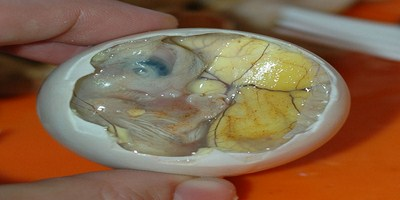 Most Bizarre Foods - Balut