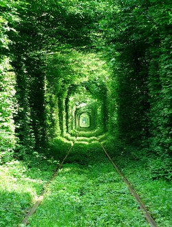 Tunnel of Love - Amazing Places in the World