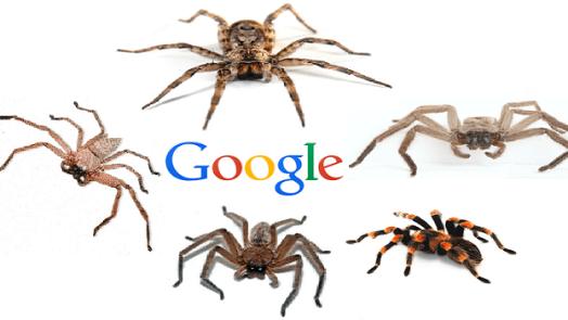 google spiders / googlebots / crawlers
