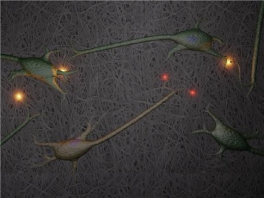 Growing Nerve Cells