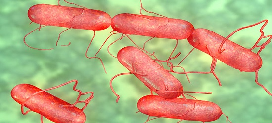Bacteria Becomes More Deadly