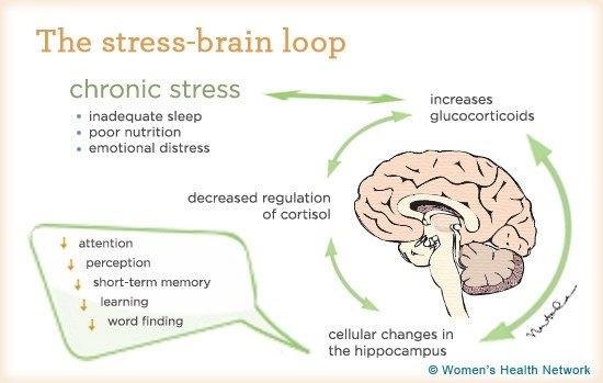 stess-brain