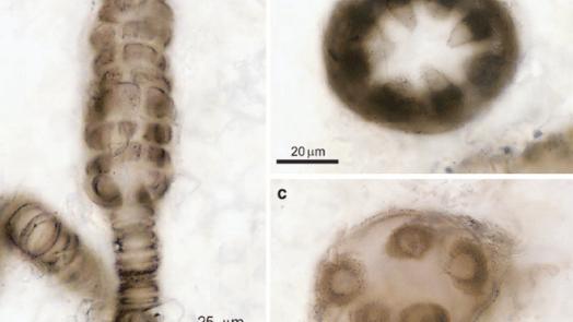 Photosynthesis Began 1.25 Billion Years Ago