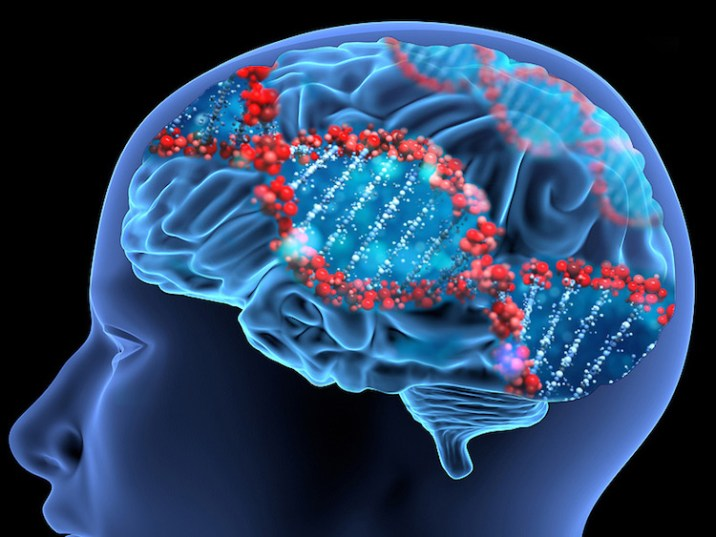 Brain Genes Linked with Intelligence
