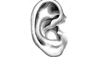 new Neurons In The Inner Ear