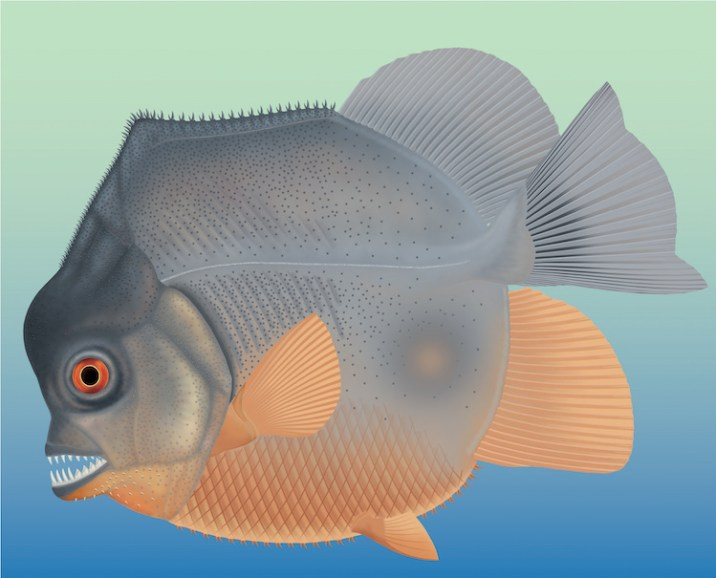 earliest known flesh-eating fish