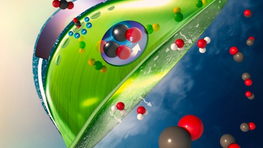 Artificial Leaves can Reduce Carbon Dioxide