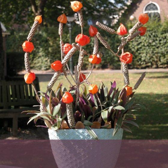 Plant/bloemschikking