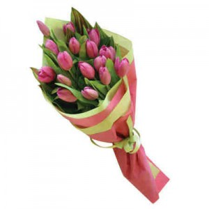 12 pink holland tulips