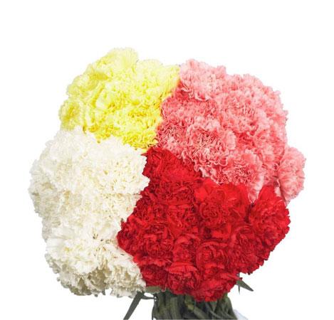 4 colors carnations bouquet