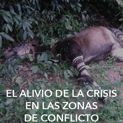 Deceased Okapi. Credit: WCS-ICCN/Aliyo Droma