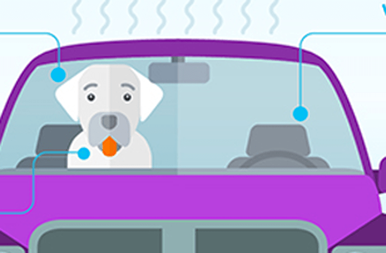 Don´t Leave Your Dog in The Car