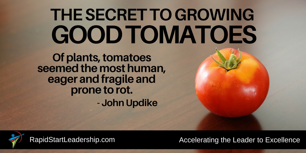 The Secret to Growing Good Tomatoes
