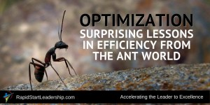 Optimization - Surprising Lessons in Efficiency From the Ant World