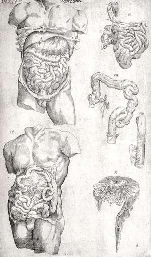 Anatomia in quat tota humani corporis fabrica