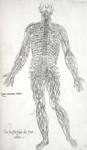 Anatomia in Quat Tota Humani Corporis Fabrica. (Anatomy in Total of the Fabric of the Human Body).