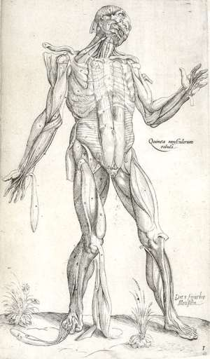 One of nine full-page anatomically illustrated plates found in Anatomia in Quat Tota Humani Corporis Fabrica. (Anatomy in Total of the Fabric of the Human Body)