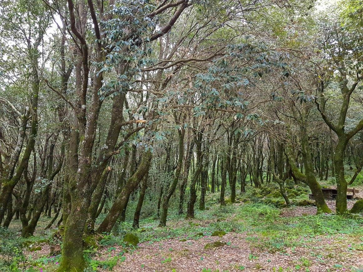 Het nationale park Monte Arci op Sardinië.