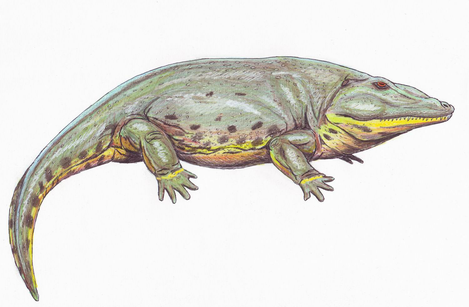 Dinosaurs Relatives Eryops Facts