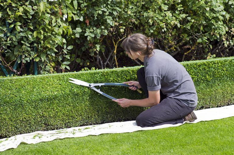Zelene površine